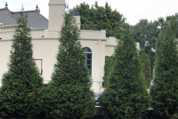 New Tree Installation